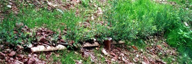 Cantiere didattico a Luserna S.Giovanni con recupero di bambu