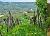 Convegno Paesaggi del Vino